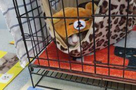 ARKC cat adoption drive 5
