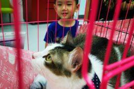 ARKC cat adoption drive 7